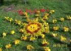 Ziedu paklājs